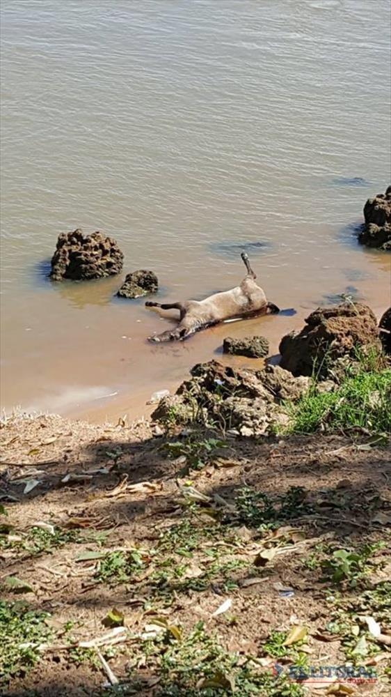 MALTRATO. Ciudadanos se mostraron indignados por la aparición de una caballo muerto en la costa. (Foto LT7)
