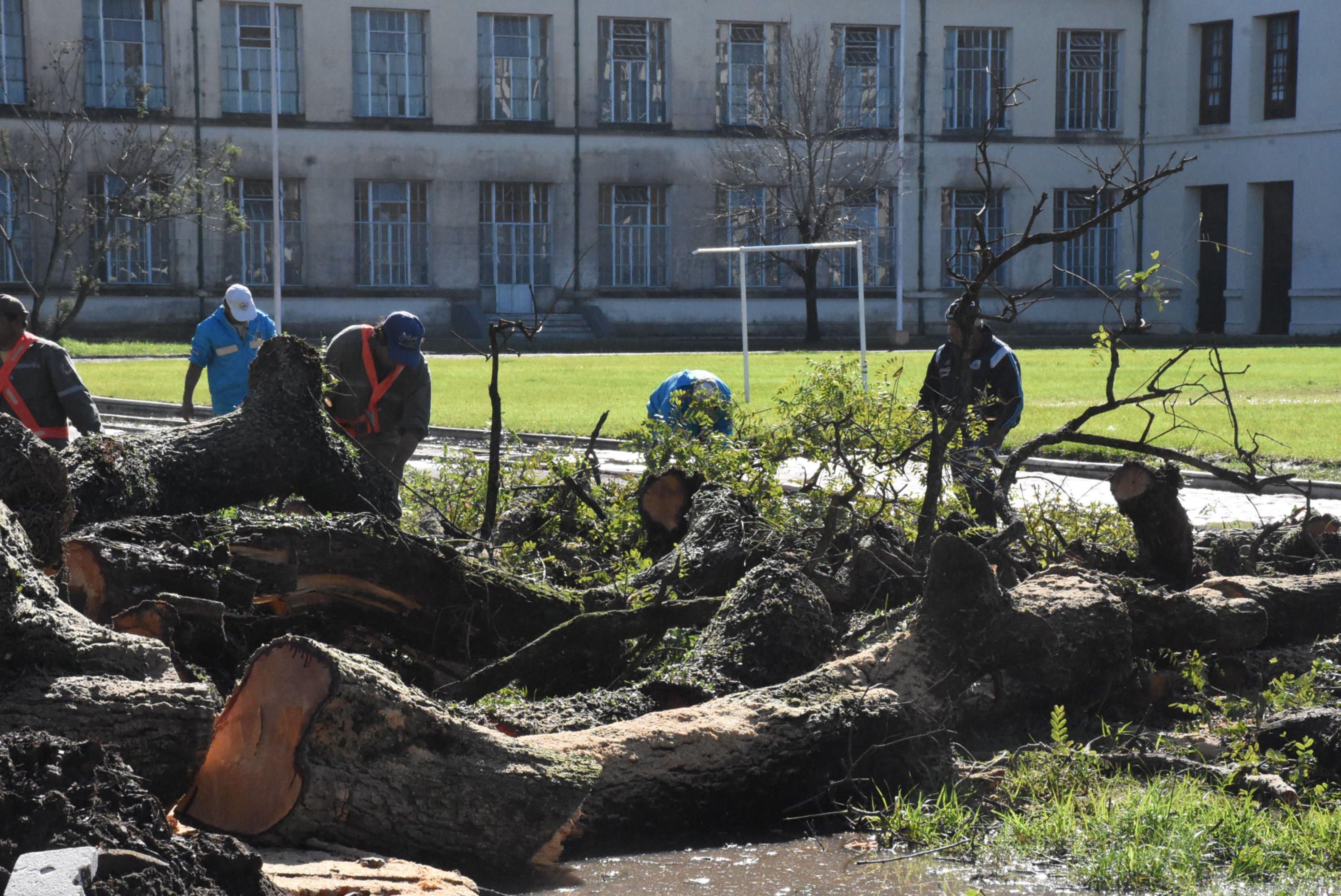 <p>Consecuencias. El muro perimetral se destruyó con la caída del árbol y alistan una nueva construcción.</p>