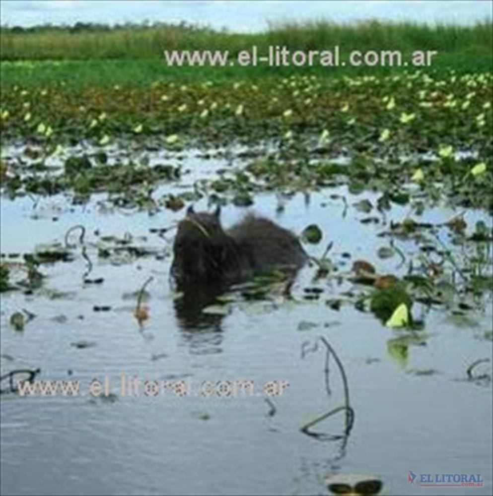 La reserva natural de los Esteros del Iberá contempla más de un millón de hectareas.