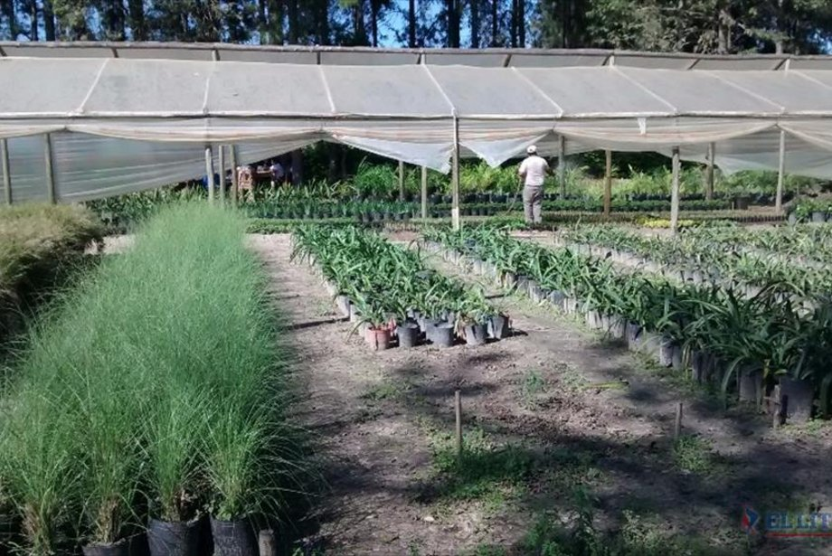 El vivero municipal se prepara con gran variedad de for Carpas ornamentales