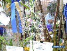 Expo Nea Orquídeas