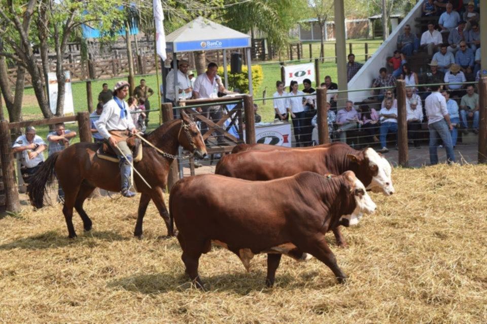 <p>Calidad. Caba&ntilde;as Correntinas nuevamente ofrecen sus Braford en la Sociedad Rural de Corrientes.</p>