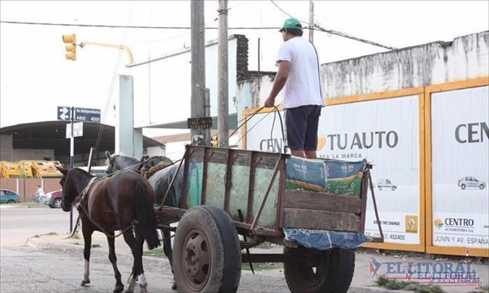 CARROS. Proteccionistas locales volverán a reclamar que se termine con los carros tirados por caballos y el maltrato animal.